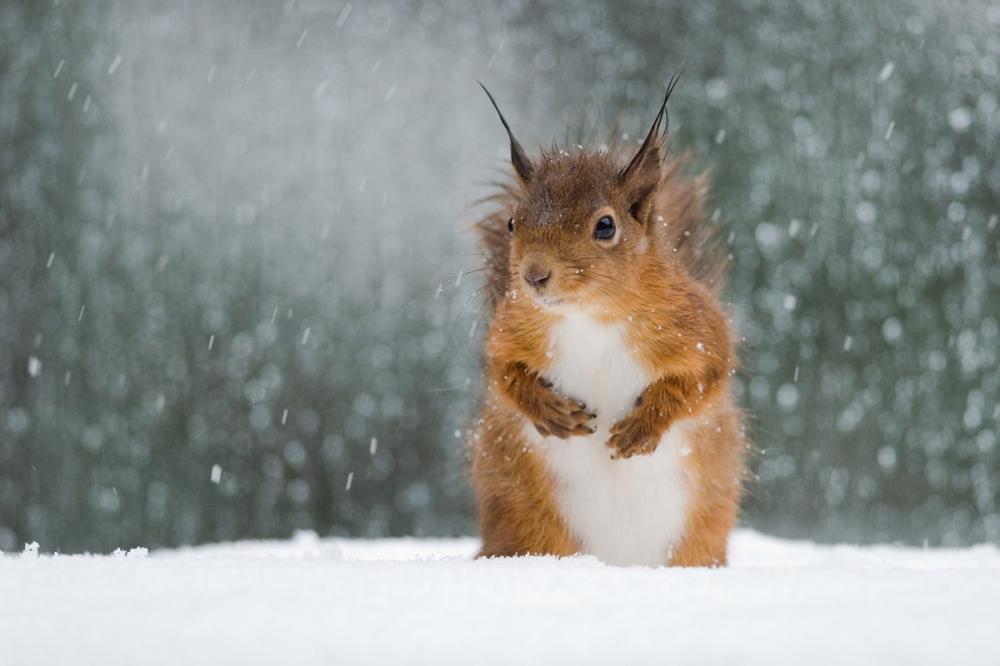 Сначала следующей недели вОмской области ожидаются снегопады